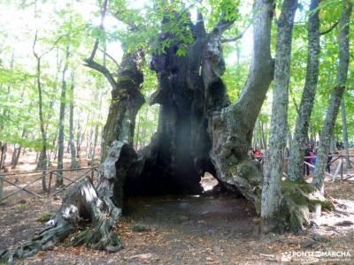 Castañar de El Tiemblo; lugares para visitar en madrid fiestas comunidad de madrid rutas asturias c